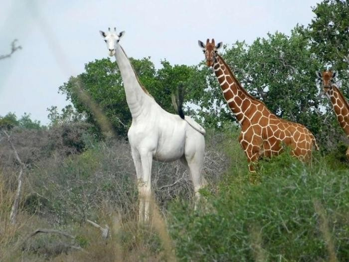 Удивительные фото природы, которых нет в учебниках (15 фото)