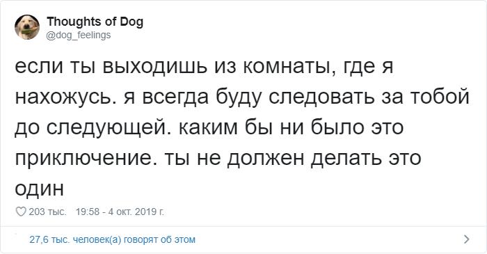 Мысли собаки: странный и милый аккаунт в Твиттере (16 фото)
