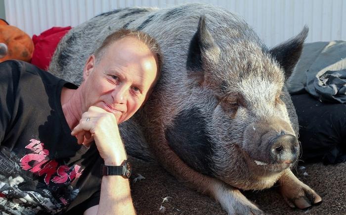 Милая история о том, как мини-пиг стал огромной свиньей (7 фото)