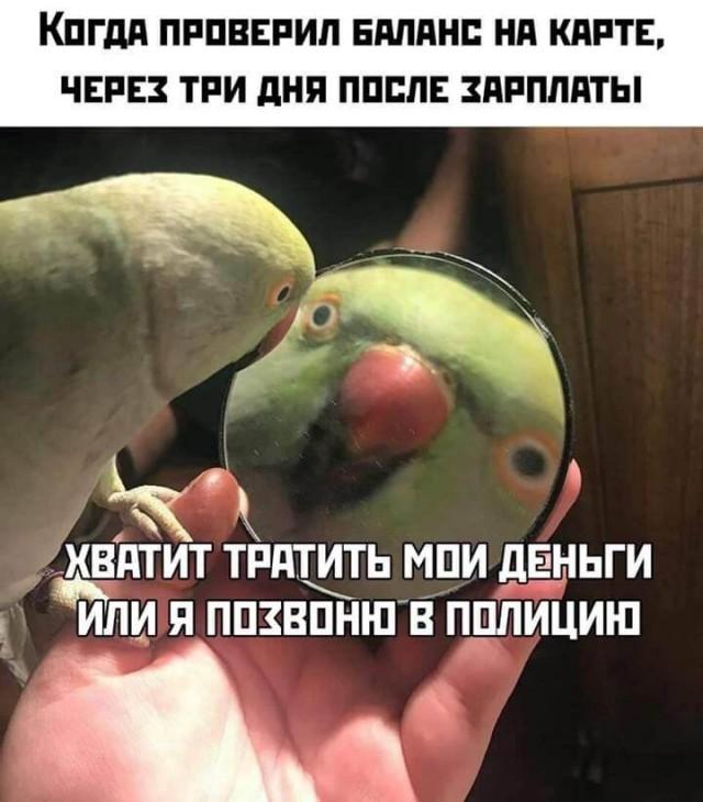 Подборка прикольных фото (60 фото) 21.10.2019