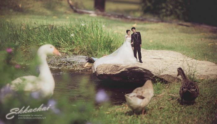 Уменьшенные новобрачные в фотографиях свадебного фотографа (15 фото)