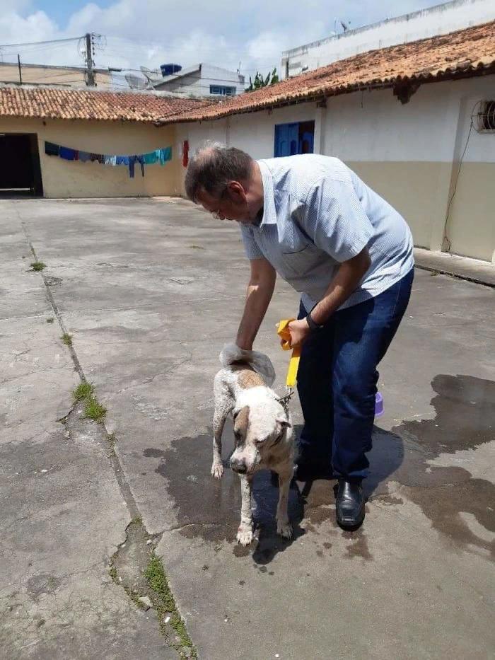 Бразильский священник спасает бездомных собак (13 фото)