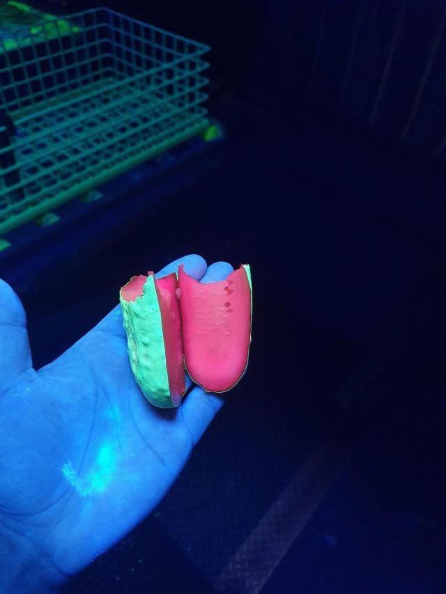 Занятный эксперимент: ультрафиолетовые огурцы (5 фото)