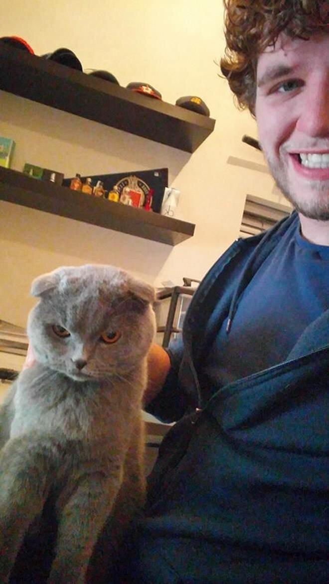 Коты, которые не любят делать селфи (18 фото)
