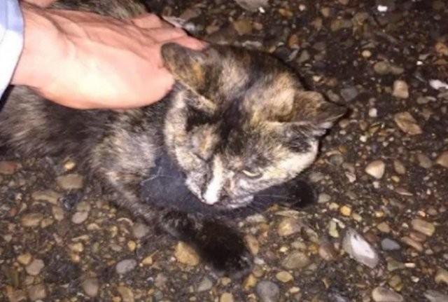 Кошка-наркокурьер была поймана с полным ошейником гашиша (2 фото)