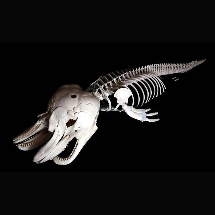 Остеологи из Франции публикуют в Instagram фото скелетов (13 фото)
