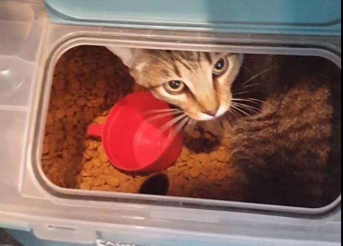 Коты - самые наглые существа на планете (15 фото)