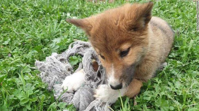 Женщина приютила щенка, а через пару месяцев ее ждал сюрприз (8 фото)