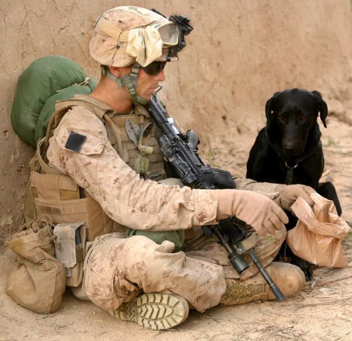 Собаки на работе — сильные, храбрые и эпичные (18 фото)