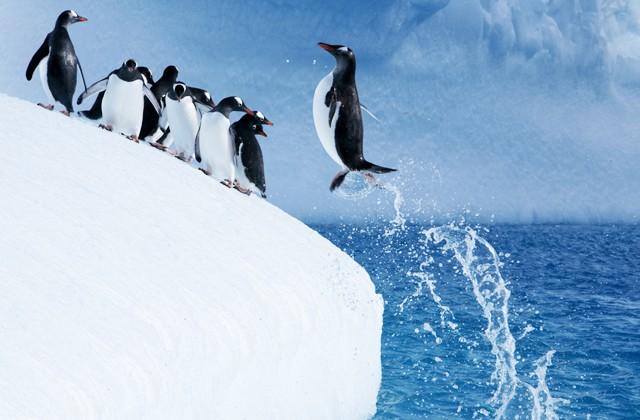 Почему пингвины не могут летать? (2 фото)