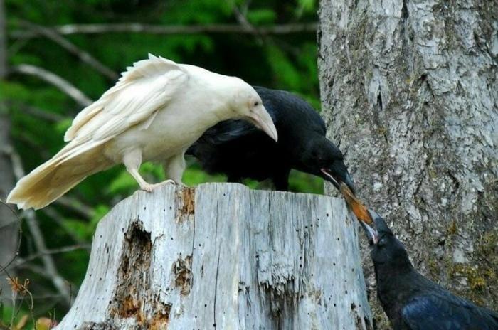 Животные-альбиносы, которые удивят вас своей внешностью (18 фото)