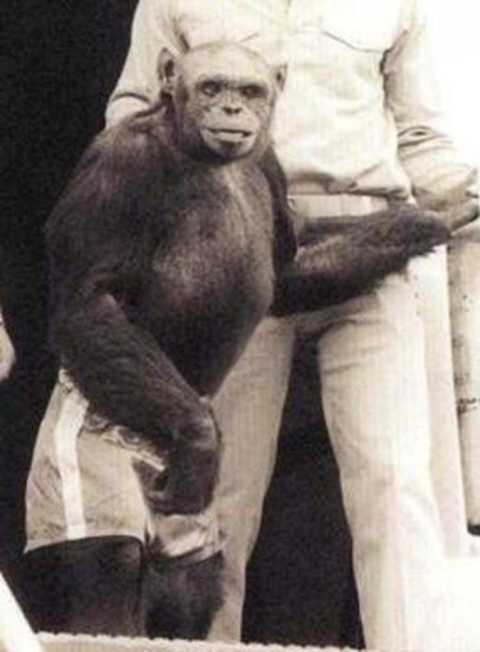 Можно ли скрестить человека и обезьяну (3 фото)