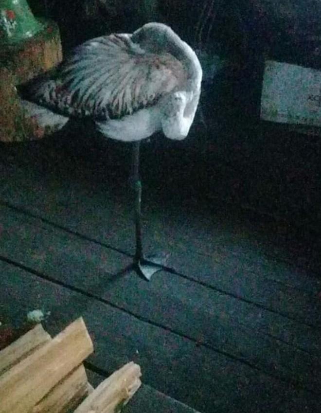 Такое случилось впервые за полвека: в Якутию прилетела необычная птица (3 фото)