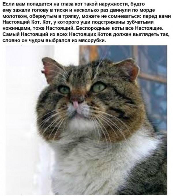 Картинки про котов (25 фото)