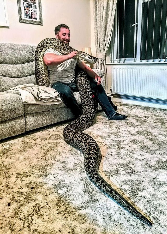 Британец купил себе маленькую змейку (5 фото)