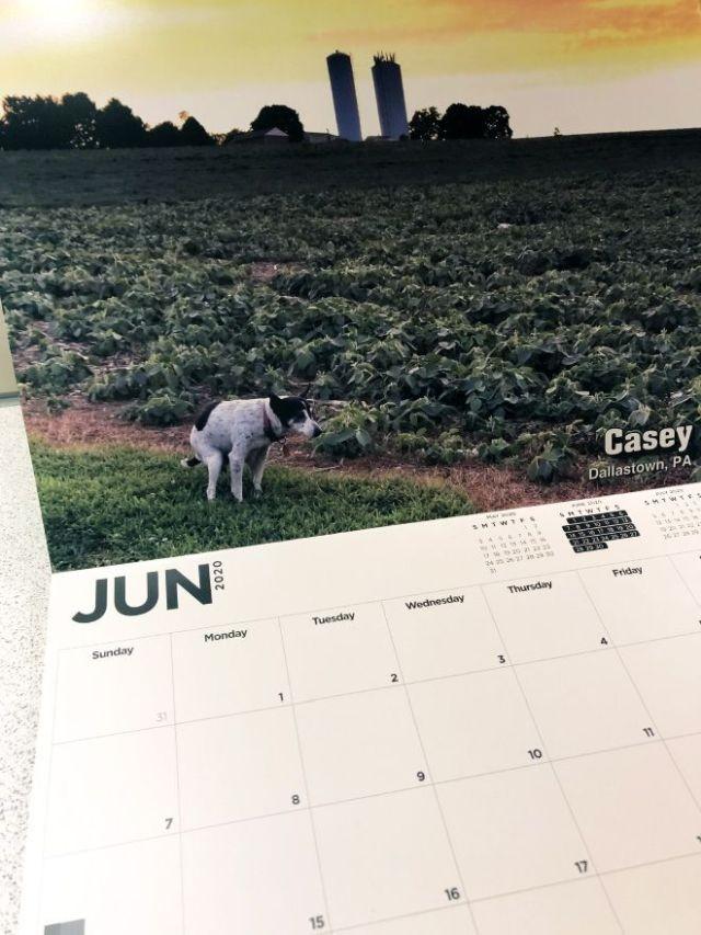 Самый странный календарь с собаками, продающийся на Гавайских островах