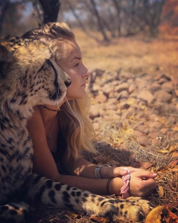 Красавица свободное время проводит с гепардами (8 фото)