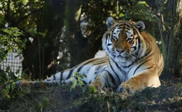 Некоторые интересные факты о животных (18 фото)