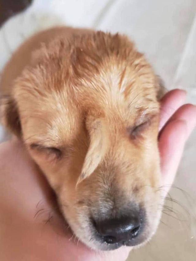 В Миссури нашли очаровательного щенка с редкой аномалией (6 фото)