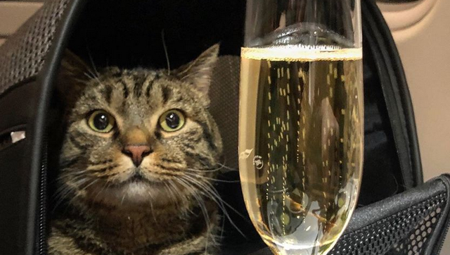 Толстый кот Виктор получил щедрые подарки (2 фото)