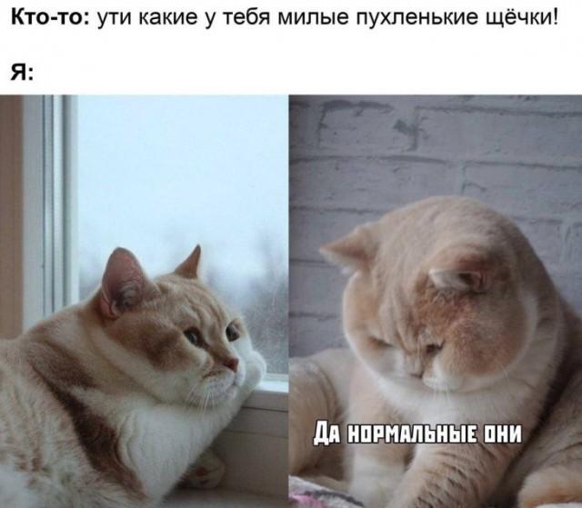 Подборка прикольных фото (65 фото) 18.11.2019