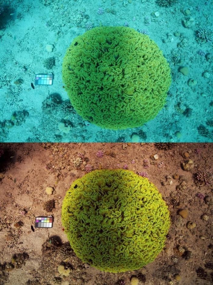 Ученая разработала алгоритм который убирает воду с фотографий (9 фото)