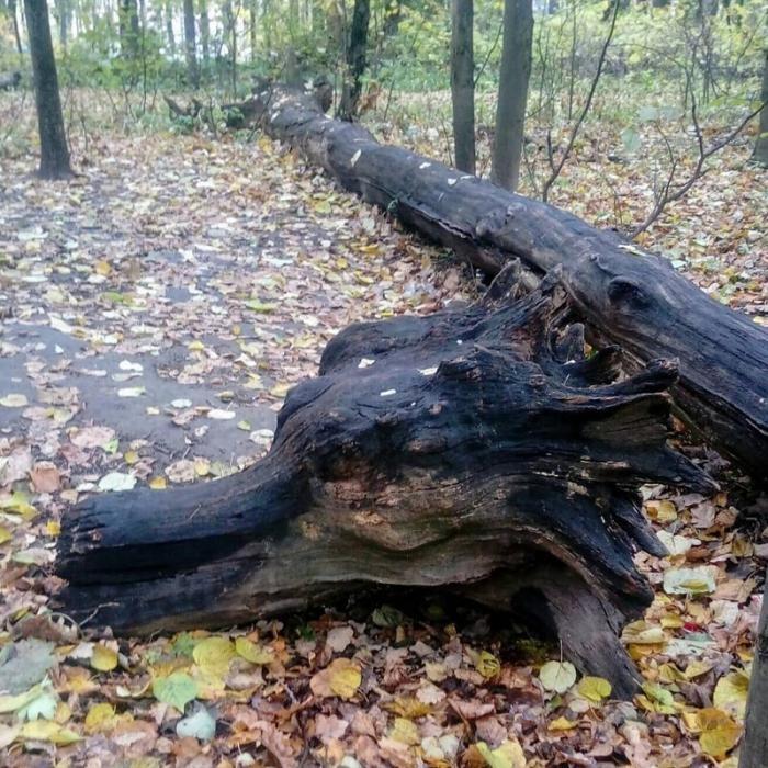 Странные и необычные находки, сделанные в лесах (12 фото)