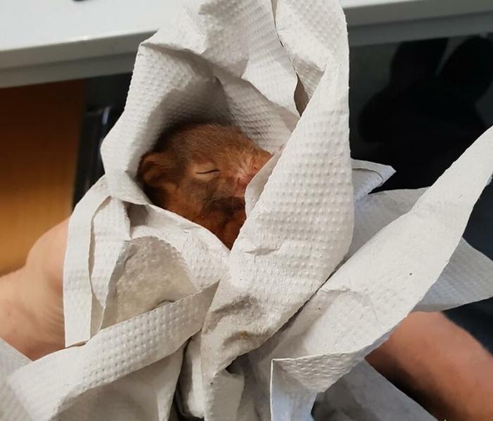 Мужчина отбился от дикого животного с помощью полиции (3 фото)