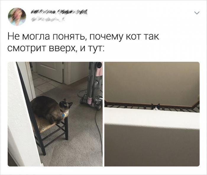 Подборка забавных твитов про котиков (20 фото)