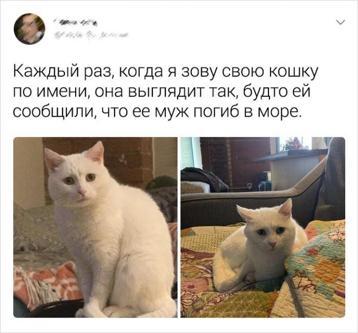 Пользователи соцсетей о котах (19 фото)