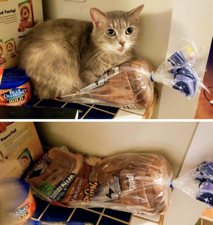 Фотоподборка о том, как тяжело жить с котом под одной крышей (20 фото)