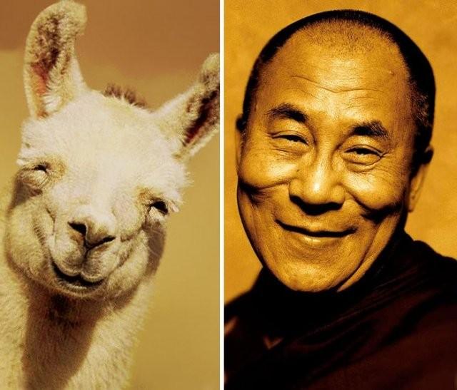 Животные, которые кого-то нам напоминают… (10 фото)