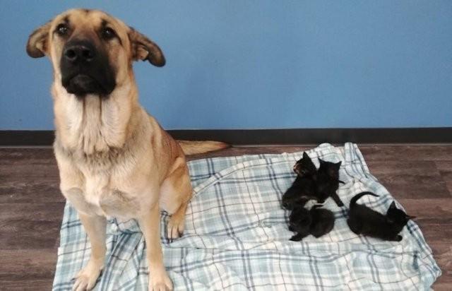 Бездомная собака спасла пятерых котят от смерти на морозе (2 фото)