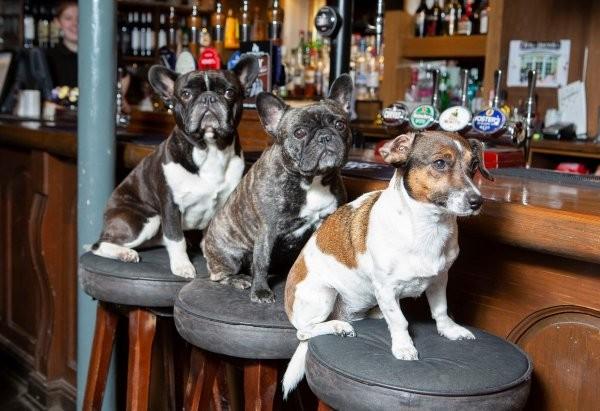"""В Великобритании есть """"собачий паб"""" (11 фото)"""