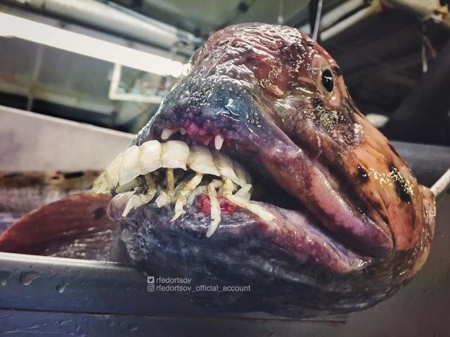 Русский рыбак достал со дна морских чудовищ (10 фото)
