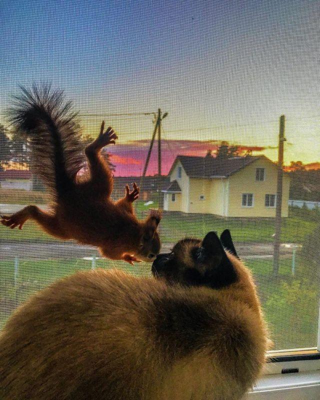Житель Карелии спас бельчонка и обзавелся новым другом (18 фото)