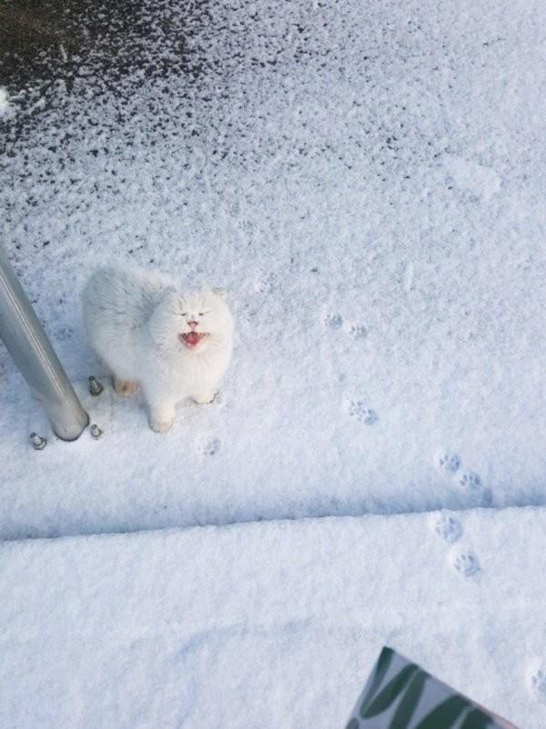Эмоции людей и животных,которые впервые в жизни увидели снег (16 фото)