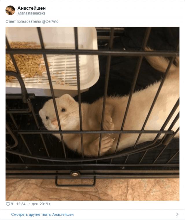 Пользователей Twitter попросили показать их животные (25 фото)