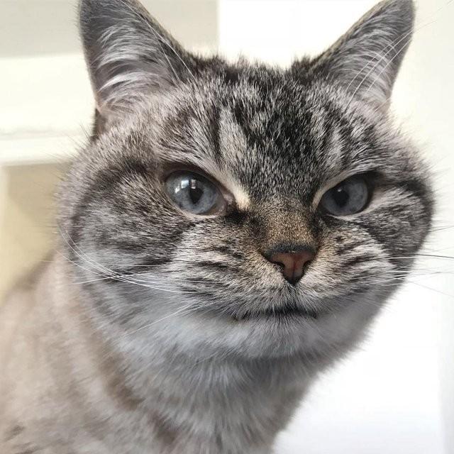 Локи - очаровательный и немного зловещий кот-вампир (12 фото)