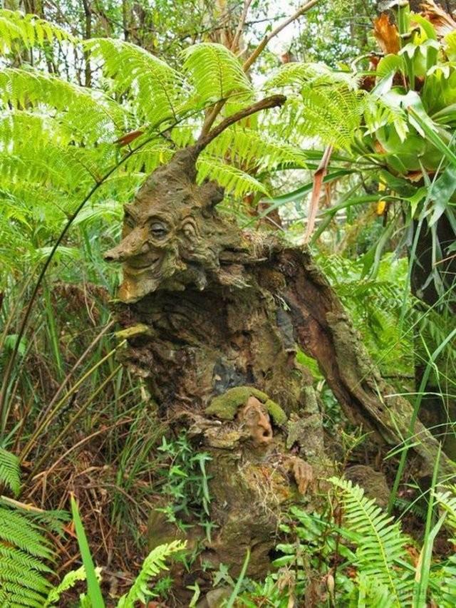 Не пугайтесь, если увидите такое в лесу (8 фото)