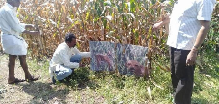 Фермер покрасил собаку «под тигра» для отпугивания обезьян (4 фото)