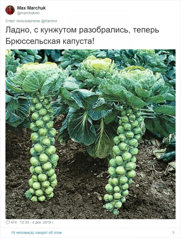 Как на самом деле растут привычные продукты (17 фото)