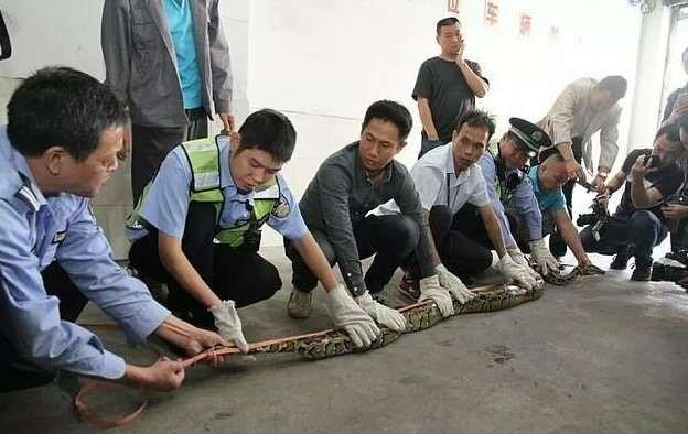 В китайском СПА обнаружился крышесносный сосед! (7 фото)