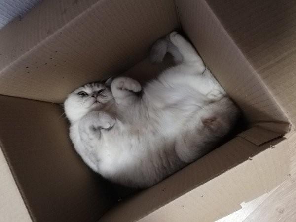 Тред в Твиттере: коты и коробки созданы друг для друга (30 фото)