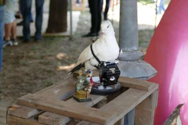Как обычный голубь стал почтальоном (4 фото)