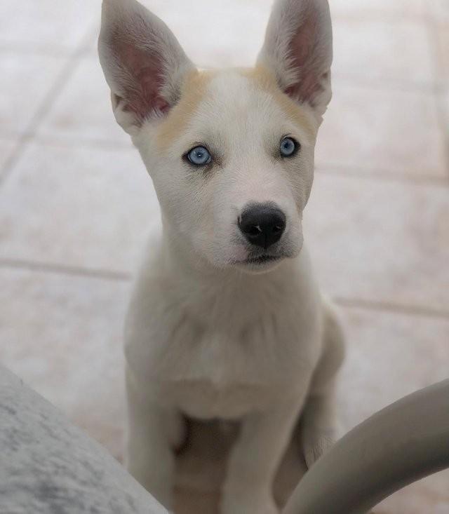 Необычные гибридные породы собак (21 фото)