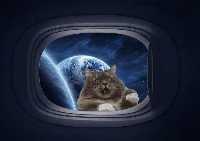Фотожабы на кота, который хочет домой (18 фото)