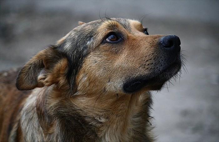 Как вести себя при нападения собаки (6 фото)