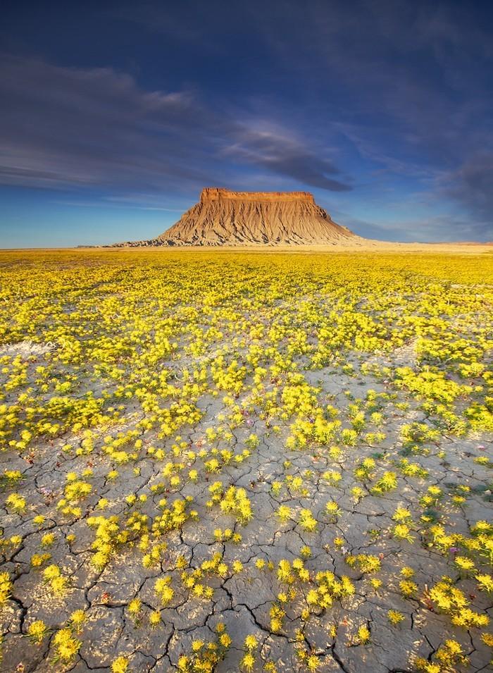 Сказочная пустыня Анза-Боррего (17 фото)