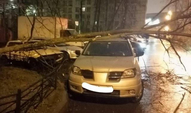 Последствия штормового ветра в Петербурге (9 фото)